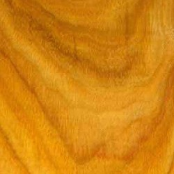 Canarywood